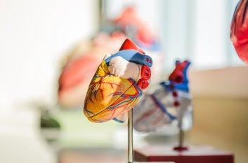heart-2607178__340.jpg