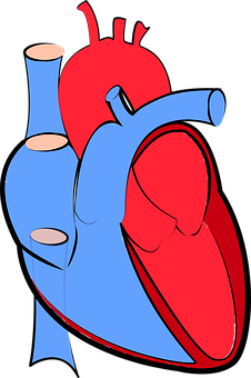 human-heart-1700453__340