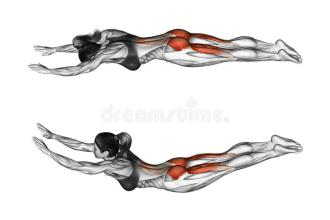 fitness-exercising-exercise-like-superman-female-target-muscles-marked-red-initial-final-steps-45723100