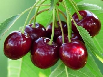 cherry-167341__340.jpg