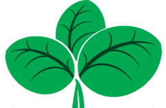 spinach-cartoon-png-1